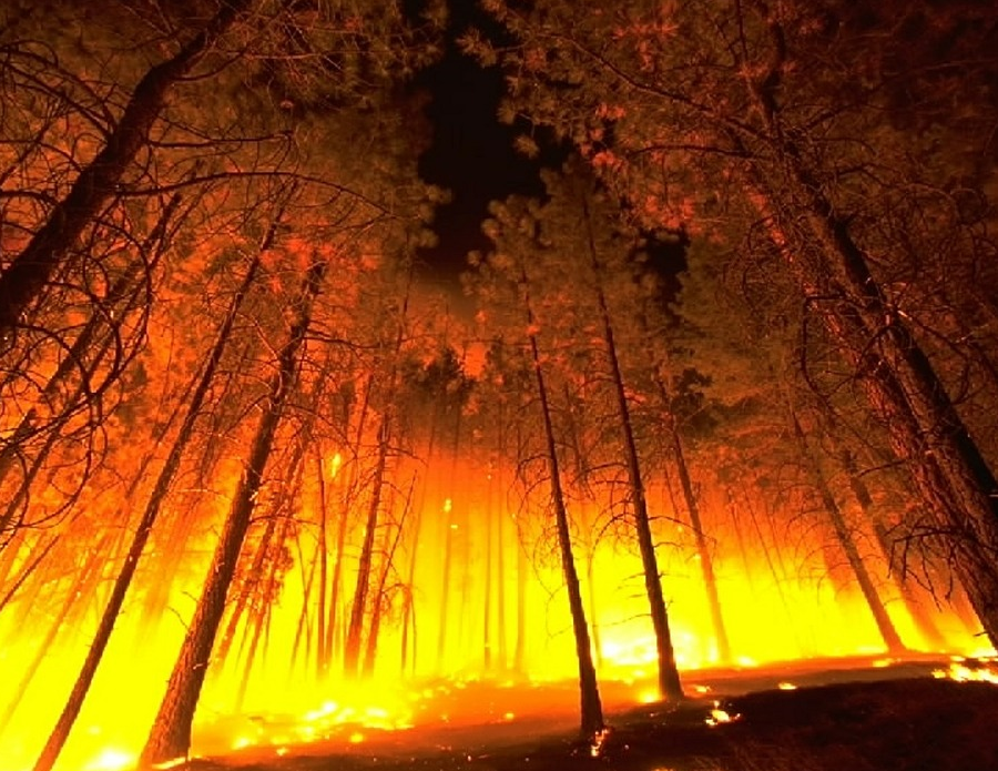 Forest fires, An enormous resource loss.
